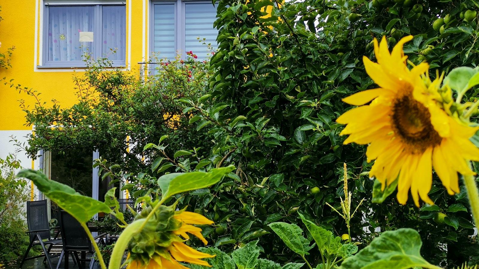 Hausansicht mit Sonnenblume im Vordergrund