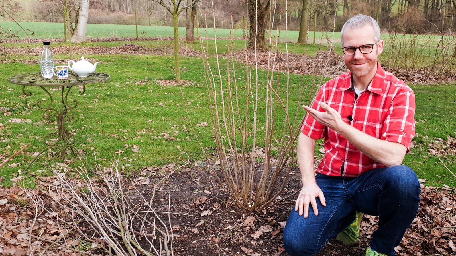 Gartenberater Philippe Dahlmann zeigt auf einen Johhanisbeer-Strauch
