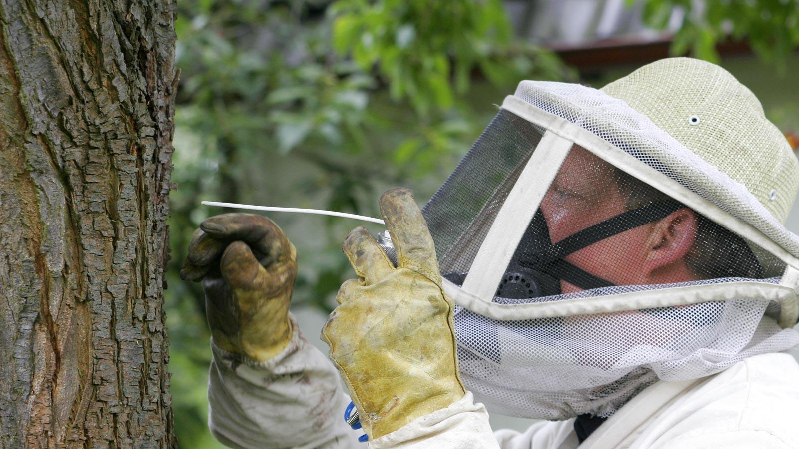 Schädlingsbekämpfer sprüht Insektenspray in einen Baum