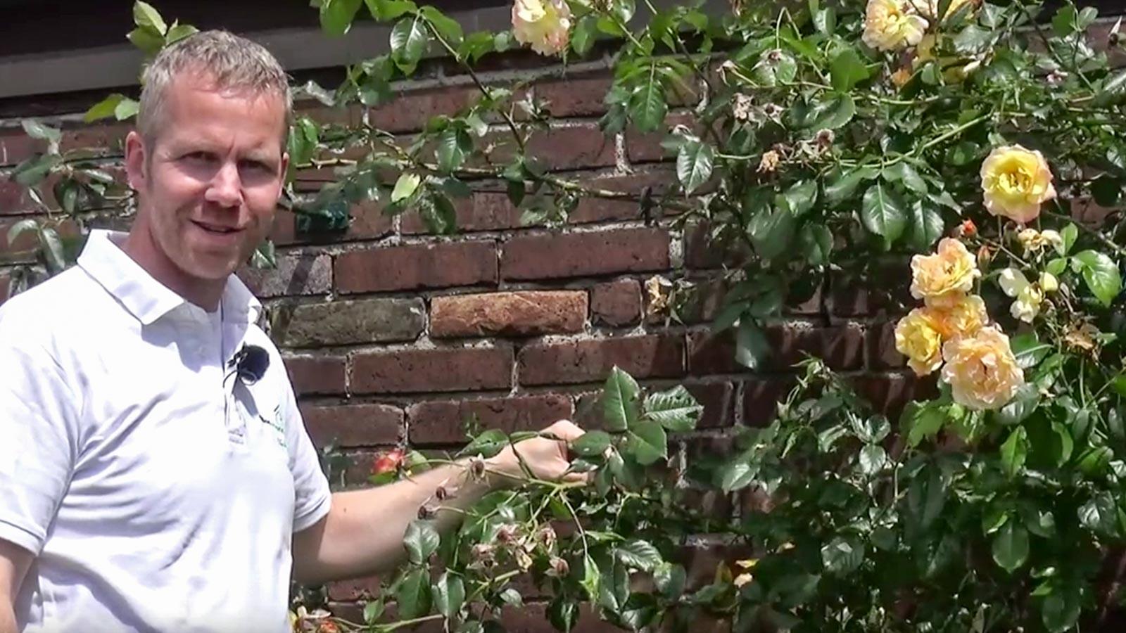 Gartenberater Philippe Dahlmann vor einer Mauer mit Rosen