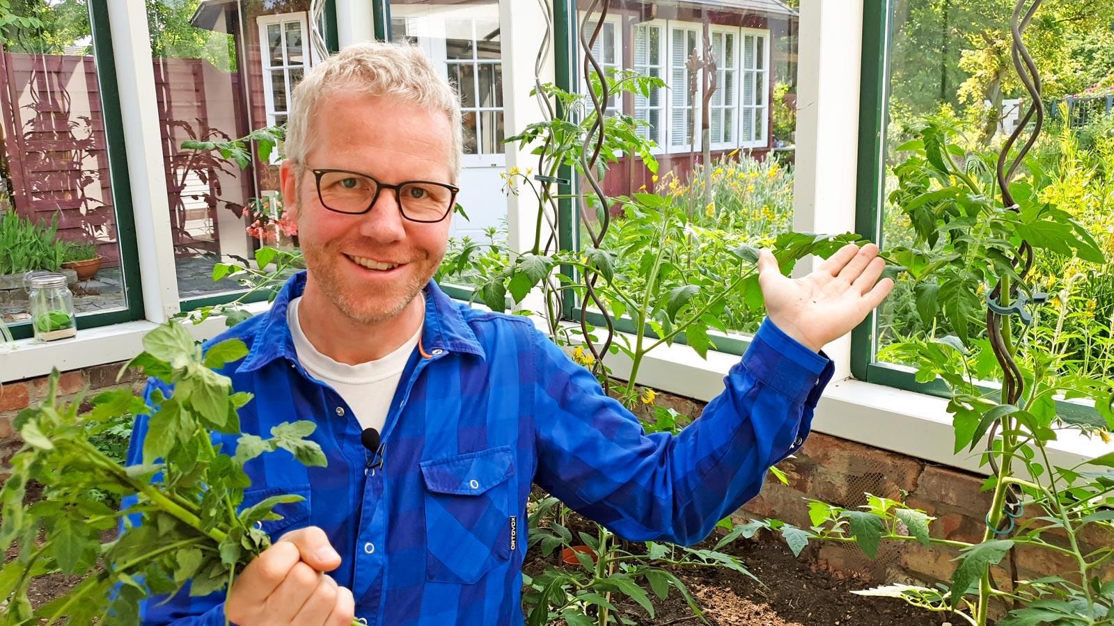 Gartenberater Philippe Dahlmann zeigt auf eine ausgegeizte Tomatenpflanze