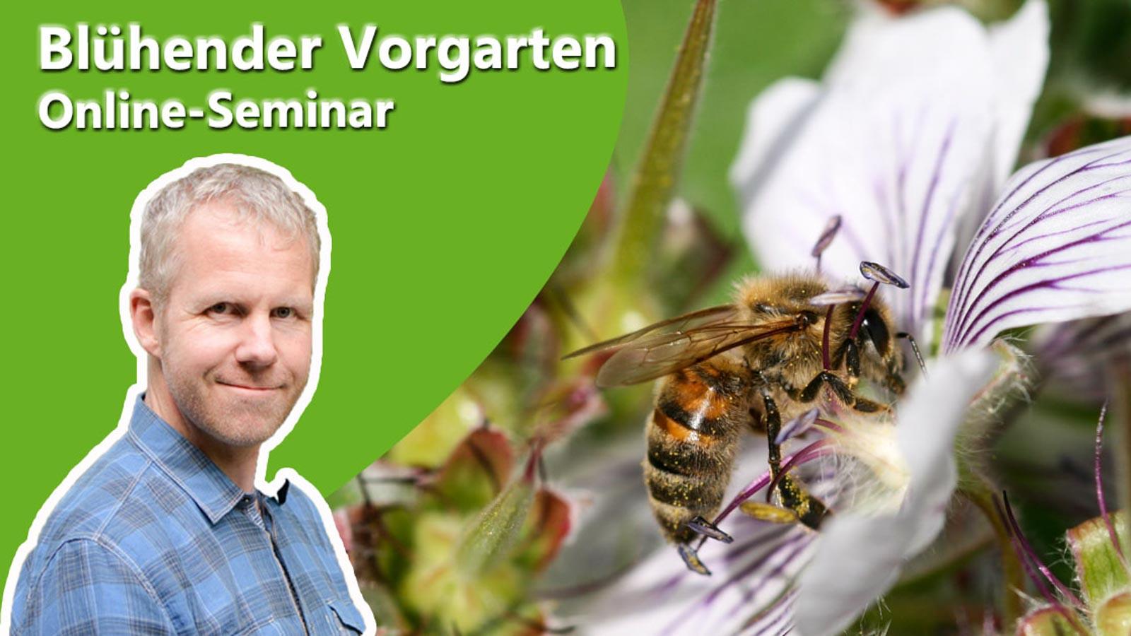 Philippe Dahlmann auf Bild mit Biene zur Ankündigung des Online-Seminars Blühender Vorgarten.