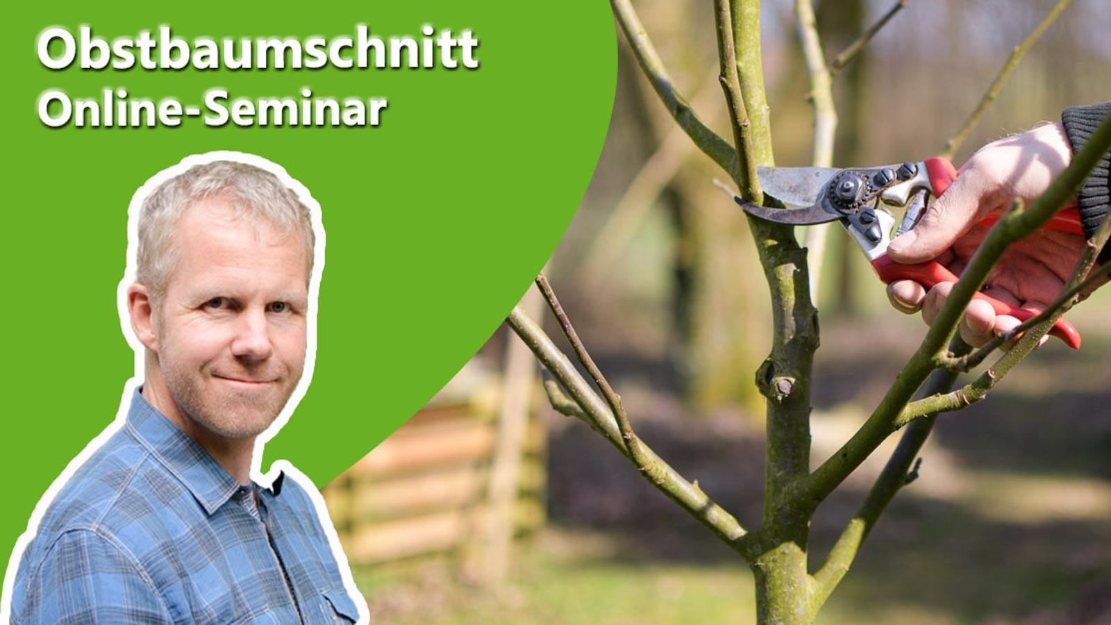 Philippe Dahlmann auf Bild mit Obstbaum und Schere zur Ankündigung des Online-Seminars Obstbaumschnitt.