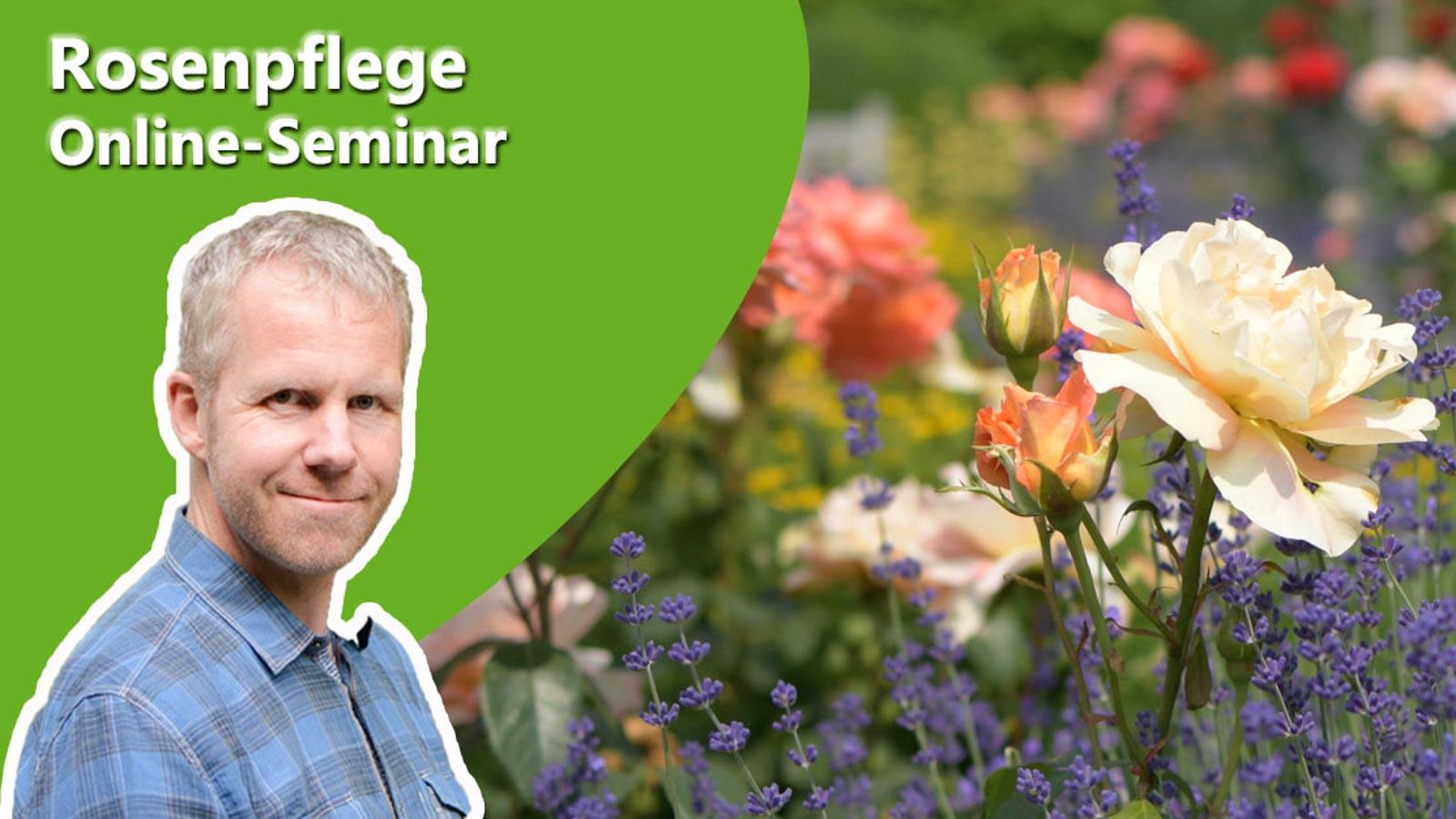 Philippe Dahlmann auf Bild mit einer Rose zur Ankündigung des Online-Seminars Steckholzvermehrung.